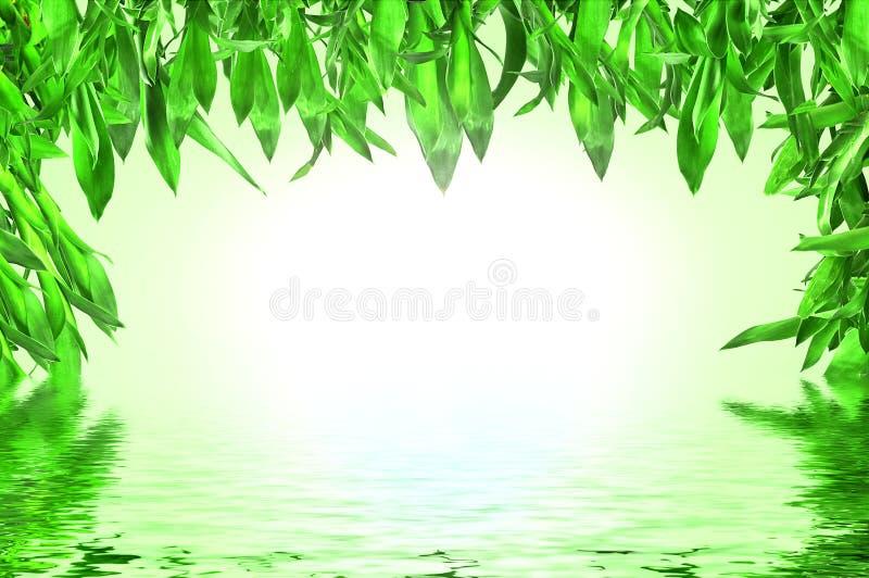 竹子留下反映水 向量例证
