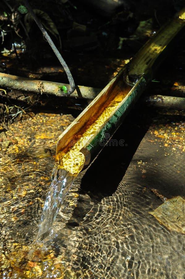 从竹子的自然食管 库存照片