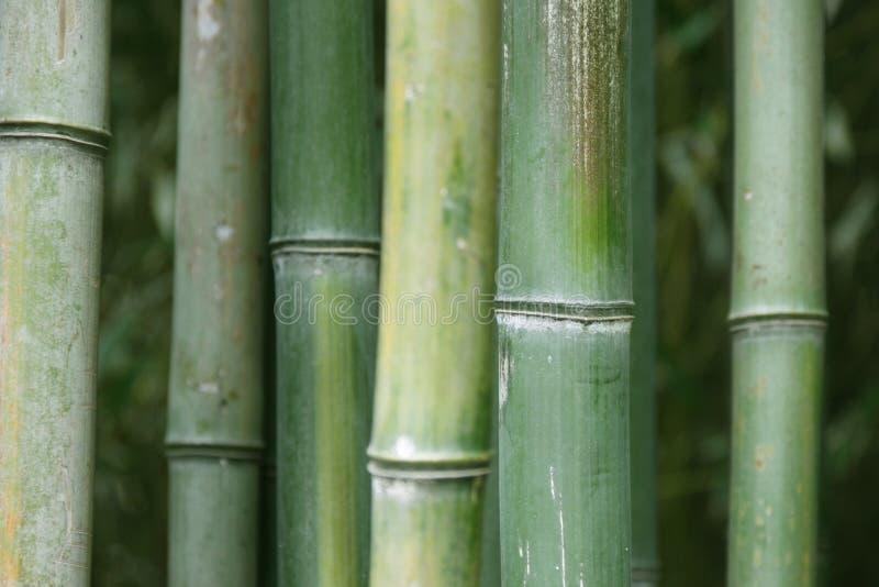 竹子绿色 免版税图库摄影