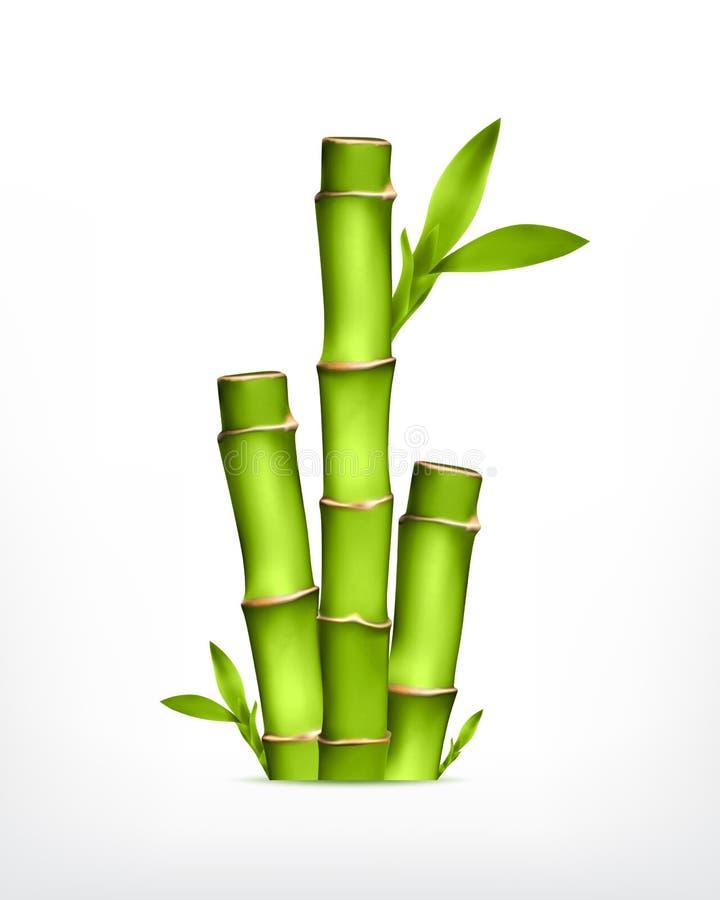 竹子词根  向量例证