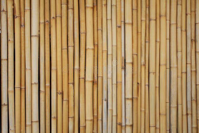 竹子黄色 免版税库存照片
