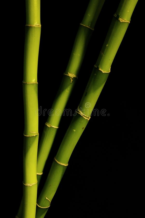 竹子黑色 免版税库存图片
