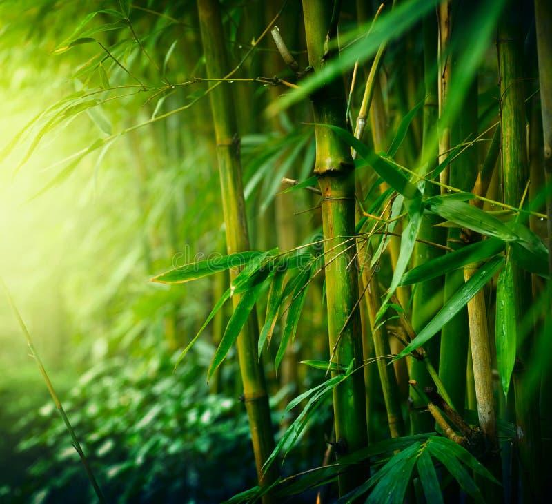 竹子 免版税库存图片