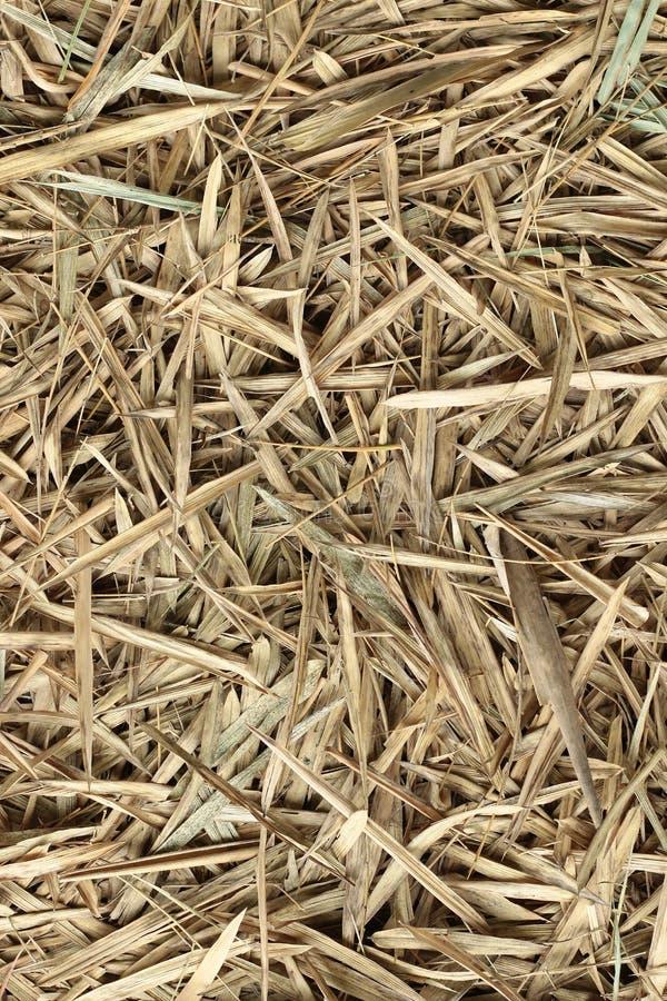 竹干草堆干燥在秋天,森林竹有叶的织地不很细棕色颜色背景 免版税图库摄影