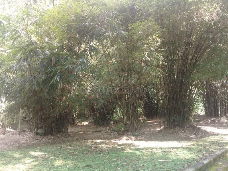 竹庭院在巴厘岛botnical庭院里 库存照片