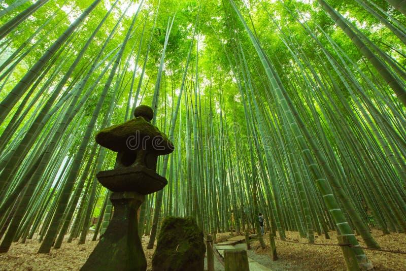 竹庭院在镰仓日本 库存图片