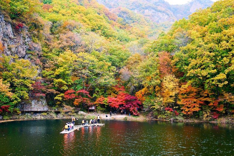 竹木筏在湖 库存照片