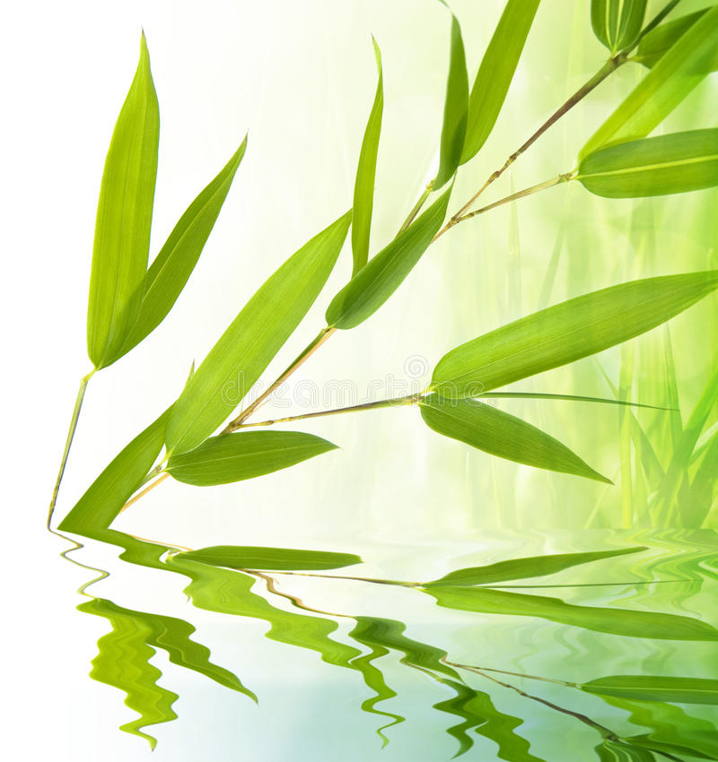 竹枝杈水 免版税库存照片