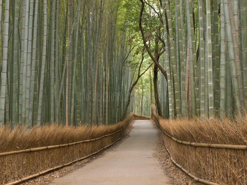 竹树丛京都 免版税库存照片