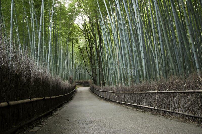 竹树丛在Arashiyama在京都,日本 免版税图库摄影