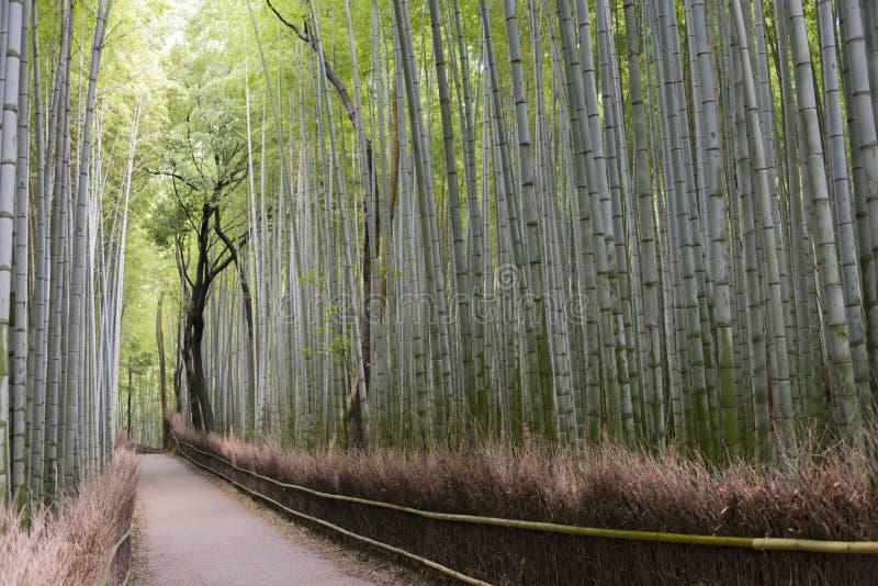 竹树丛, Arashiyama,京都 图库摄影