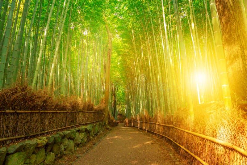 竹树丛Arashiyama京都 免版税库存照片