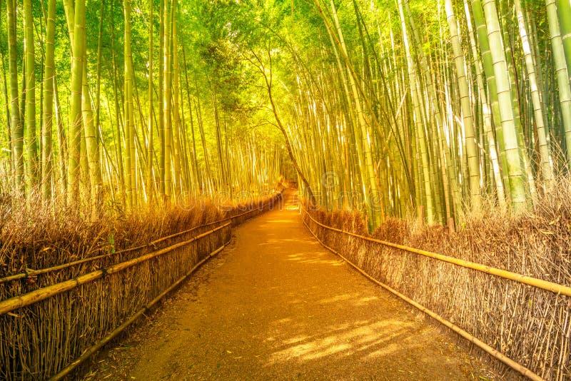 竹树丛Arashiyama 免版税库存照片