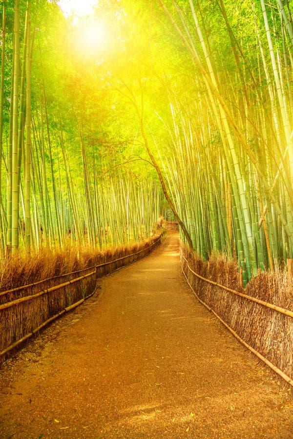 竹树丛Arashiyama 库存照片