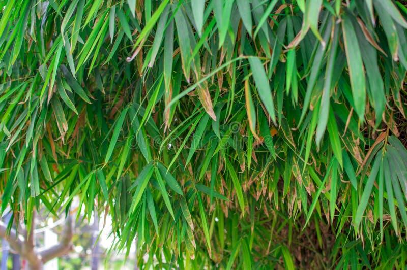 竹树在小森林区域 免版税库存照片