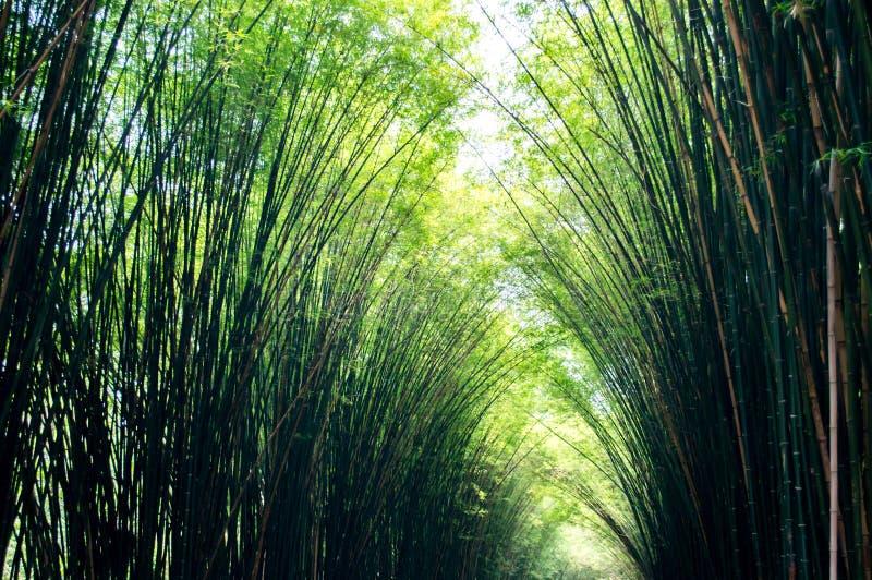 竹树风景在热带雨林的 免版税库存图片