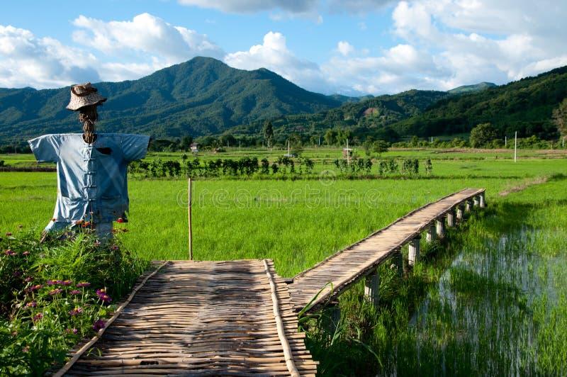 竹桥梁和稻草人在绿色米领域移动 免版税库存照片