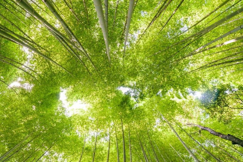 竹森林在Arashiyama,京都 免版税库存图片