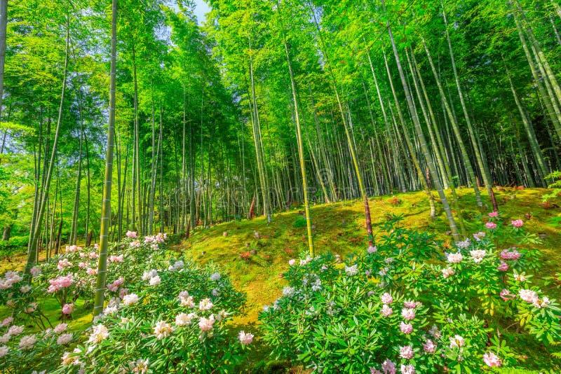 竹森林在Arashiyama 免版税库存照片