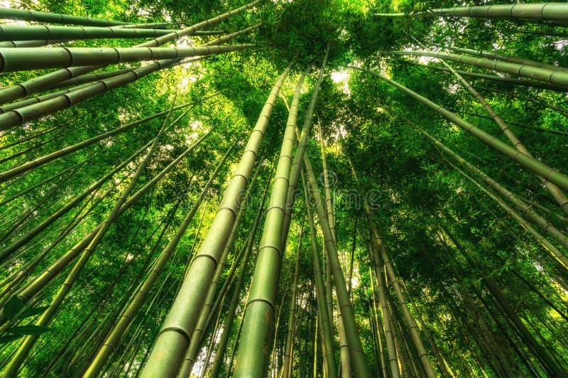 竹森林在Damyang 免版税图库摄影