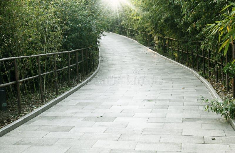 竹森林线索 库存照片
