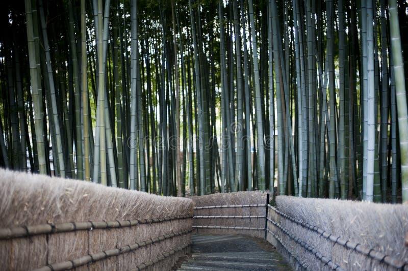 竹森林走道在京都日本 图库摄影