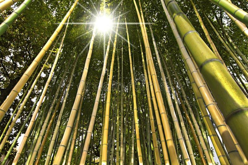竹森林透视图 免版税图库摄影
