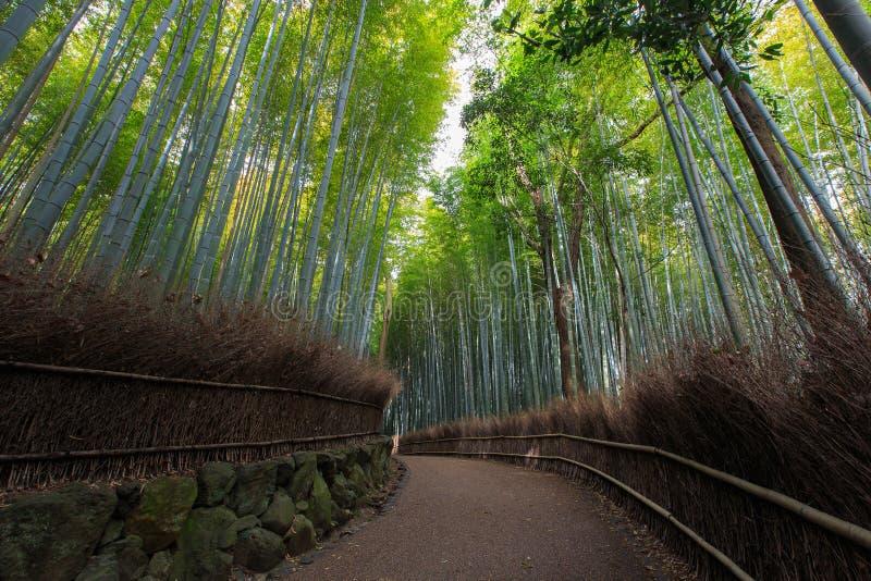 竹森林Arashiyama竹树丛在京都,日本 免版税库存图片