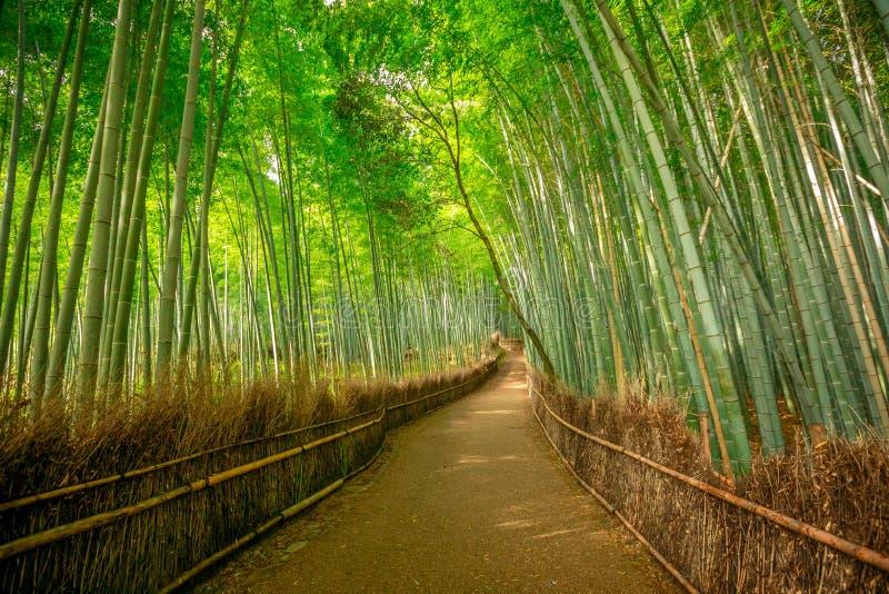 竹森林Arashiyama背景 库存图片