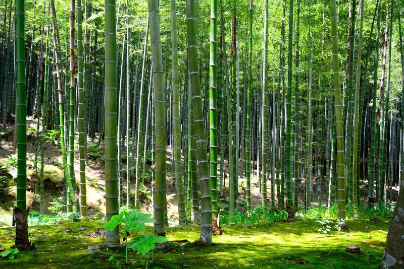 竹森林Tenryu佛教寺庙,京都,日本 库存图片