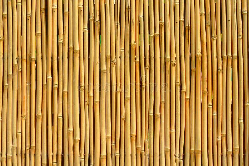 竹纹理 免版税图库摄影