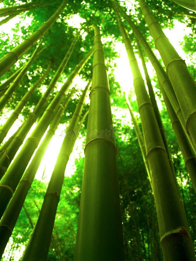 竹结构树 库存图片