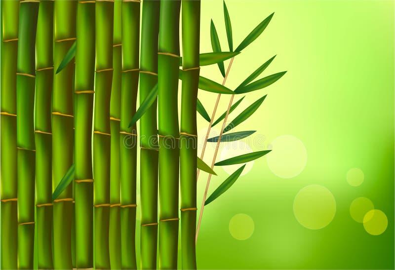 竹美好的边界向量 库存例证
