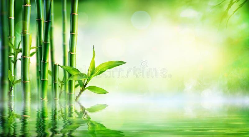 竹背景-与反射的茂盛植物 免版税图库摄影