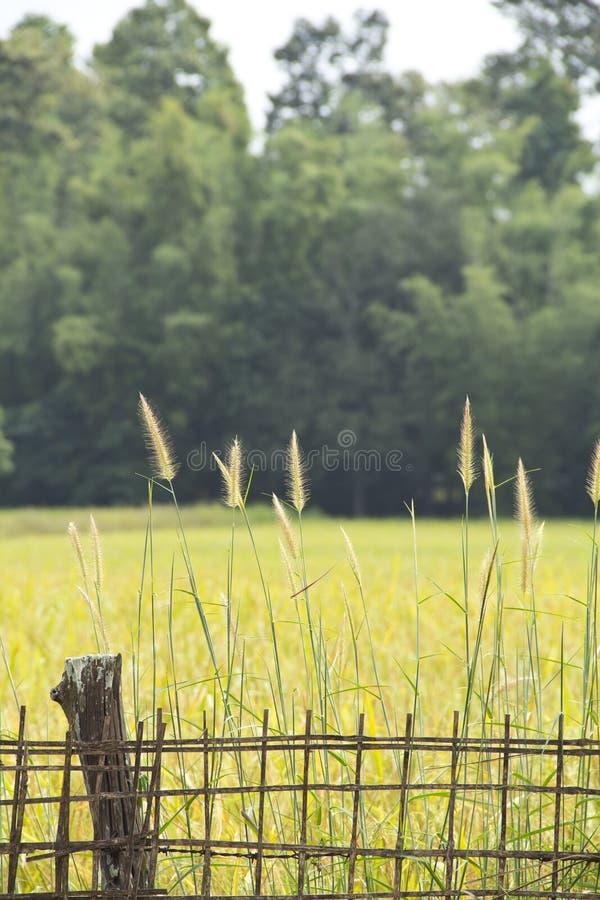 竹范围和草 免版税库存照片