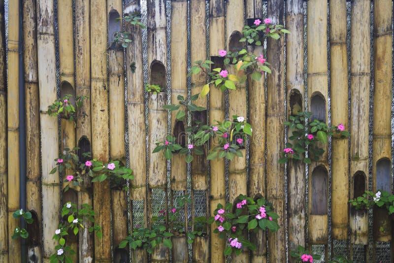 竹装饰范围 免版税库存照片
