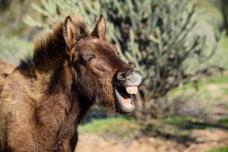 笑的驮货驴子特写镜头 免版税图库摄影