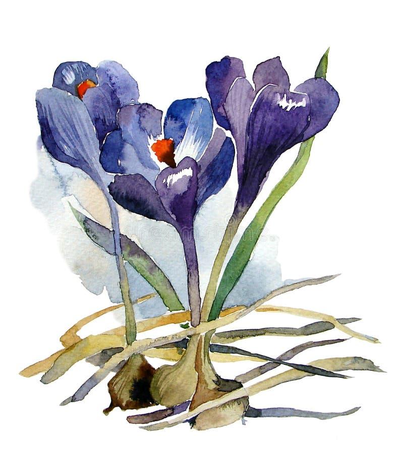 第一与电灯泡的花水彩紫色番红花 库存照片
