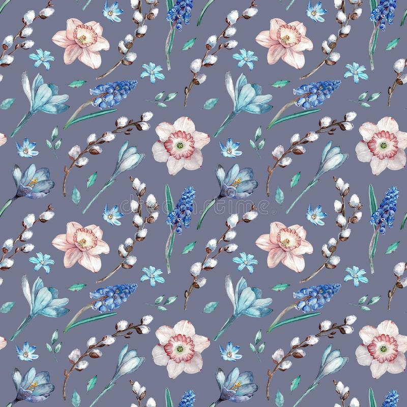 第一个春天花和杨柳分支 在灰色蓝色背景的水彩无缝的样式 库存例证