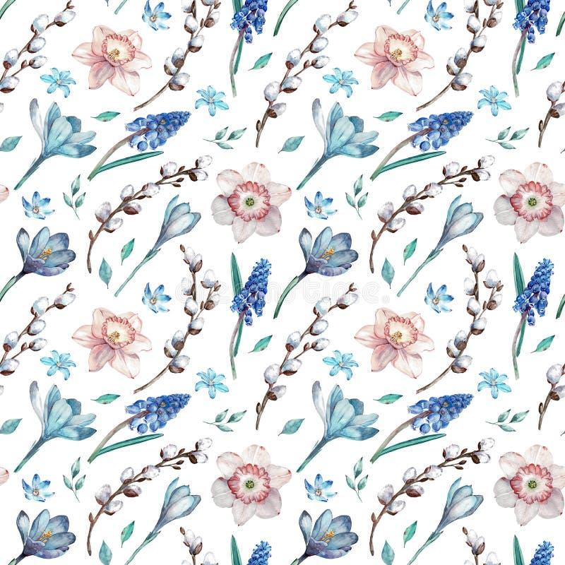 第一个春天花和杨柳分支 在白色背景的水彩无缝的样式 库存例证