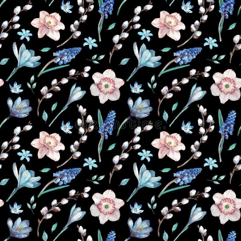 第一个春天花和杨柳分支 在黑背景的水彩无缝的样式 库存例证