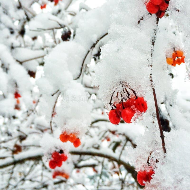 第一个雪冬天 库存照片