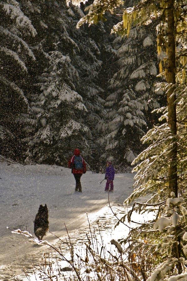 第一冬天高涨 库存图片
