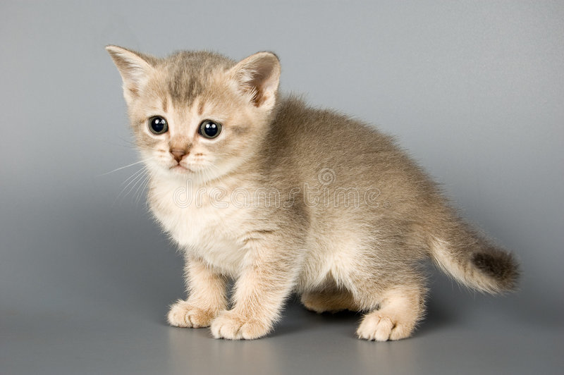第一只小猫摆在的时间 免版税库存图片