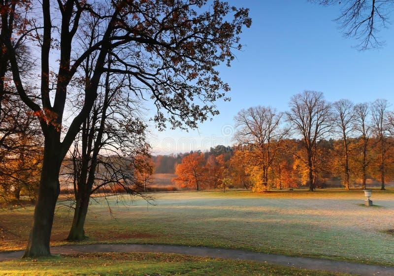 第一早晨光在公园在10月 库存照片