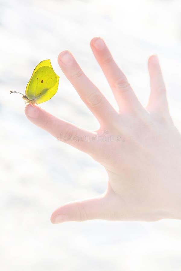 第一春天美丽的黄色蝴蝶坐开放儿童的手的手指反对被弄脏的白雪背景 免版税库存照片