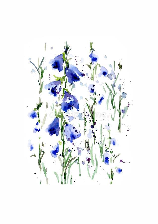 第一春天野花的例证-蓝色森林开花 在白色背景的手拉的水彩绘画 库存图片