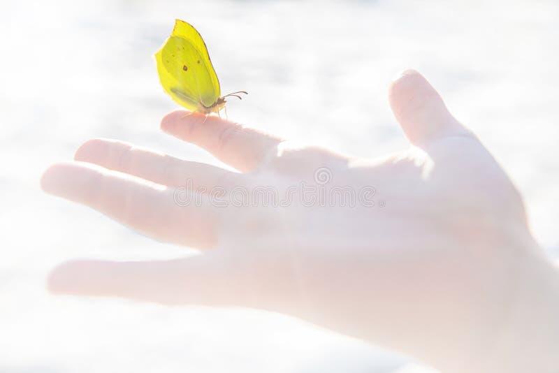 第一春天黄色蝴蝶镇静地坐在食指的开放儿童的手 库存照片
