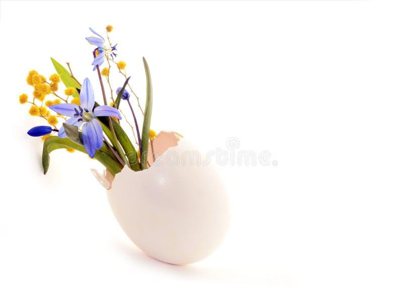 第一朵春天花、蓝色snowdrops和含羞草在蛋壳 复活节假日背景 免版税库存照片