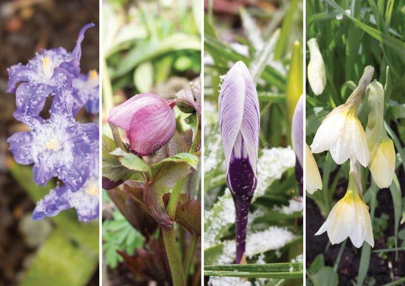 第一朵春天花的拼贴画 图库摄影